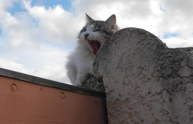 Katze Collioure