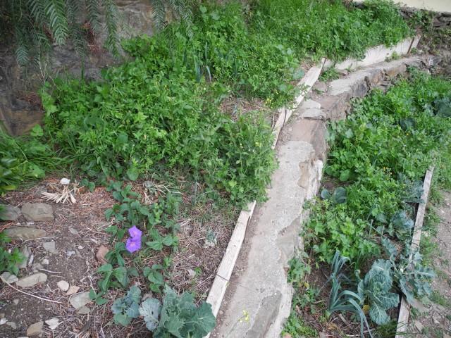 Gemüsebeet Wildpflanzen